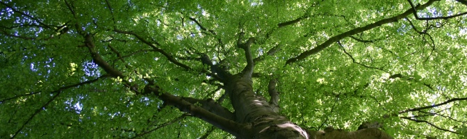 Grøn trækrone_672_200
